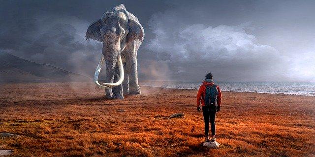 Słoń - Jak zjeść słonia?