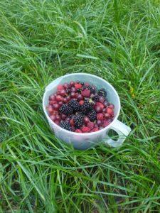 Śniadanie - jeżyny i maliny z ogródka